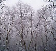Winter Woodland by Dandelion Dilluvio