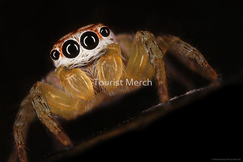 Garden Jumping Spider by Adam Gormley