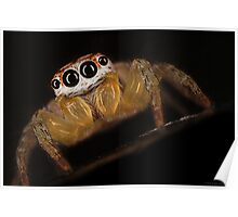 Garden Jumping Spider Poster