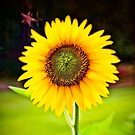 Sunflower at Sunset by Randall Faulkner
