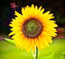 Sunflower at Sunset by Randall Faulkner