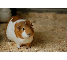 Hamtaro Photographic Print