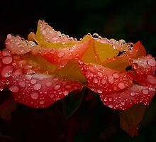 It's raining ... No 2 by Rosalie Dale