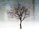 A lone Tree by Angela King-Jones
