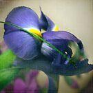 Iris by Mary Ann Reilly
