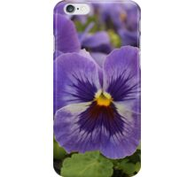 Blue Pansies iPhone Case/Skin