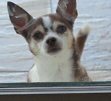 Chihuahuas need love too. by trustthedog