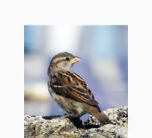 sparrow Men's Baseball ¾ T-Shirt