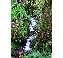 Forest Stream - Glenabo Woods, Cork, Ireland Photographic Print