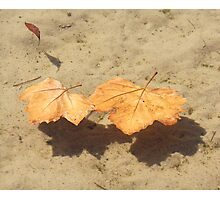 Leaves of Autumn Floating Photographic Print