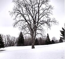 Tree in Landscape, Early Spring with Snow  by M Sylvia Chaume