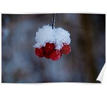 Winter berry Poster