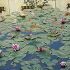 Lotus Pond by Shanna Underwood