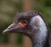 Emu by Deborah McGrath