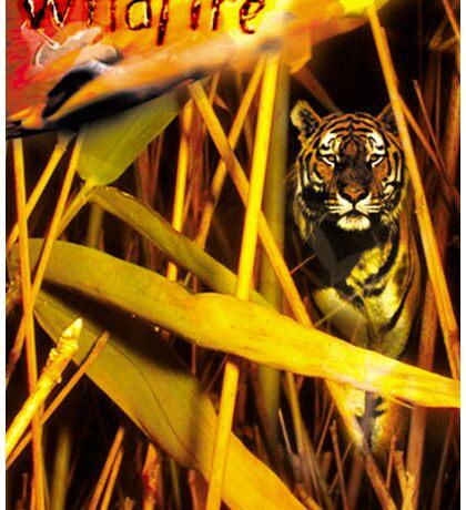 Tiger In The Grass Sticker