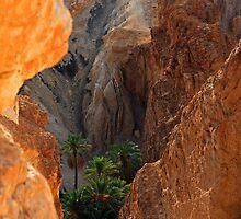 Desert oasis by Tom Prokop