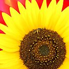 Sunflower by Stefan Casaletto