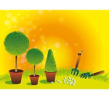 Summer Topiary Photographic Print