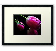 Trio Tulips. Framed Print