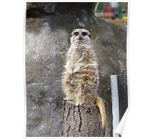 Meerkat Manners Poster