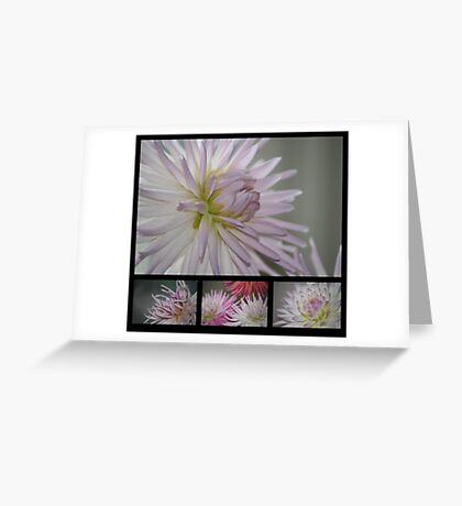 A Study in Lilac Greeting Card