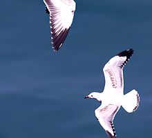 Birds on the Wing. by digipix