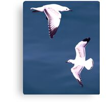 Birds on the Wing. Canvas Print