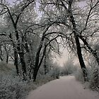 Frosty Path by wwyz