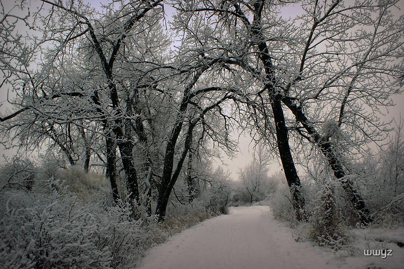 Frosty Path by wwyz