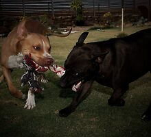 Playtime! by Craig Hender