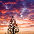Winter Sunrise by sunnykalsi