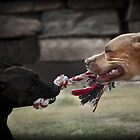 Tug-O-War by Craig Hender