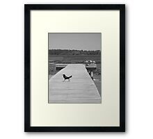 Just Passing By! Framed Print
