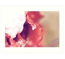 Frozen Tears Art Print