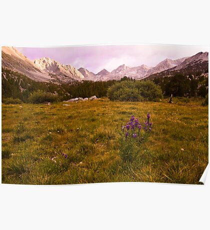 Lupine, Little Lakes Valley Poster