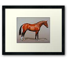 Quantador, Hanoverian Stallion Framed Print