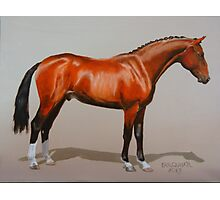 Quantador, Hanoverian Stallion Photographic Print