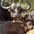 THE BUFFALO - MOTHER AND CALF - Syncerus caffer - BUFFEL by Magriet Meintjes