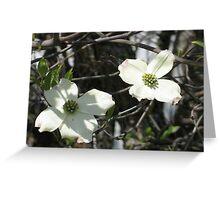 Dogwood Blooms 2 Greeting Card