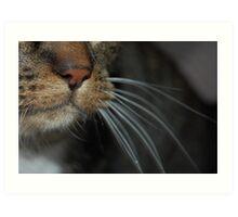 Close-up! Art Print