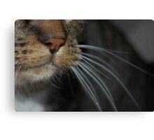 Close-up! Canvas Print