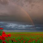 Poppy Fields by Igor Zenin