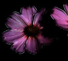 Fractal Cosmoses by Teresa Zieba