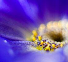 Blue by Silke Magino