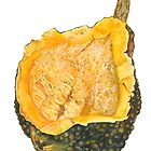 Winter Squash  by Elaine Bawden