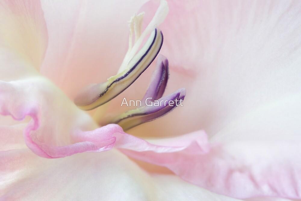 Dreamy Gladiolus by Ann Garrett