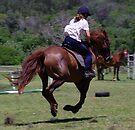 Horse Power by Brian Edworthy