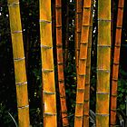 Bamboo Forest by Lisa Taylor