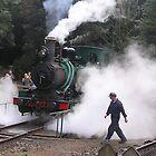 West Coast Wilderness railway  by Alison Murphy