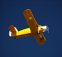 Big Yellow Taxi @ Evans Head Airport by muz2142
